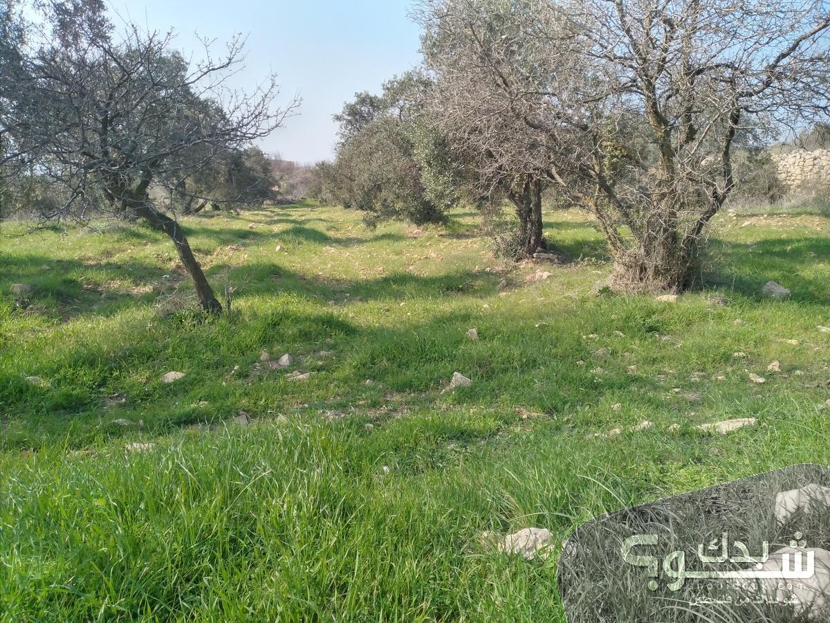 أرض دونم ونص مربعة في أرنبا طابو